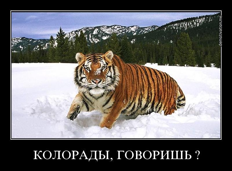 Я-Русский!(максимальный репост!