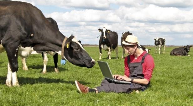 Фермеры в маленьких поселках Карелии впервые начнут получать субсидии из бюджета