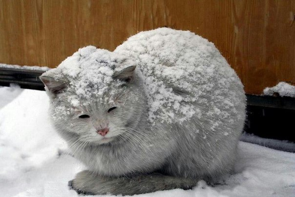 Помогайте дворовым котам!
