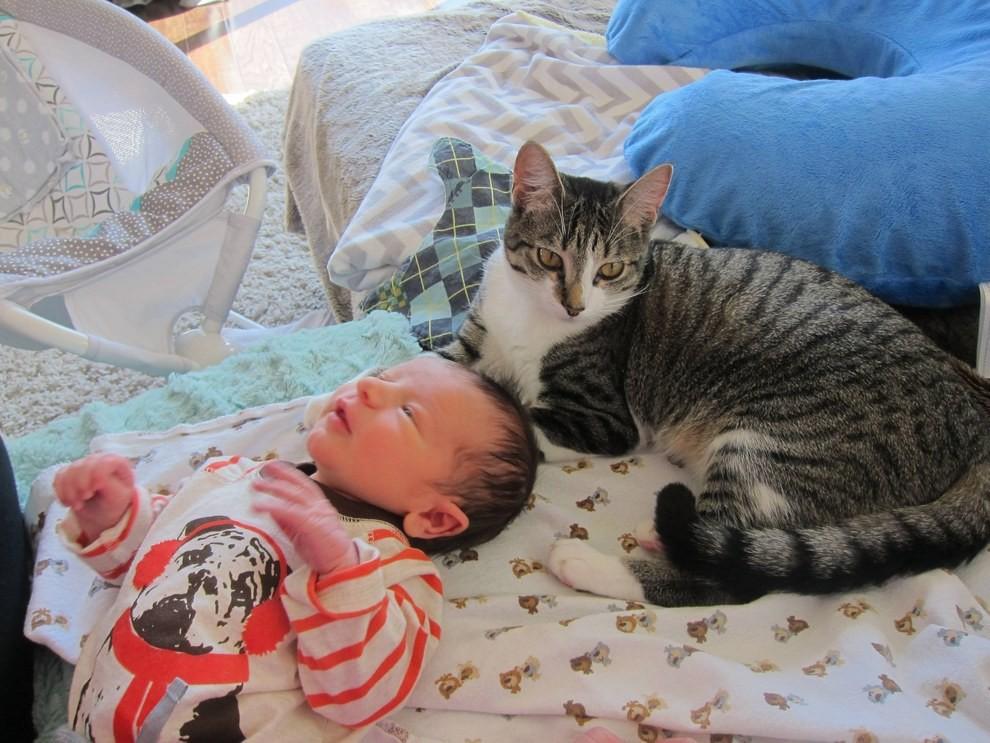 Пара спешит уверить всех, что Рокси уже пришла в себя и привыкает к малышу кошка, малыш, новость, реакция