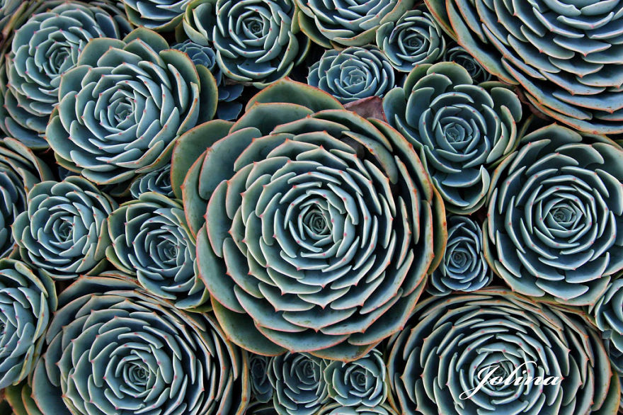 Perfect-Geometric-Patterns-In-Nature7__880