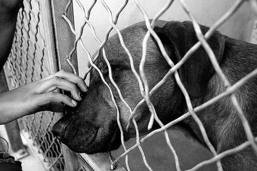 История для всех собак, не потерявших надежду...