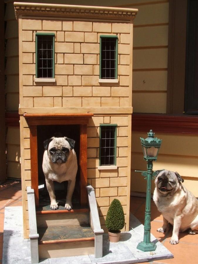 Собачьи элитные будки животные, юмор