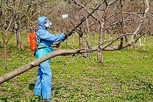 Опрыскивание деревьев весной.