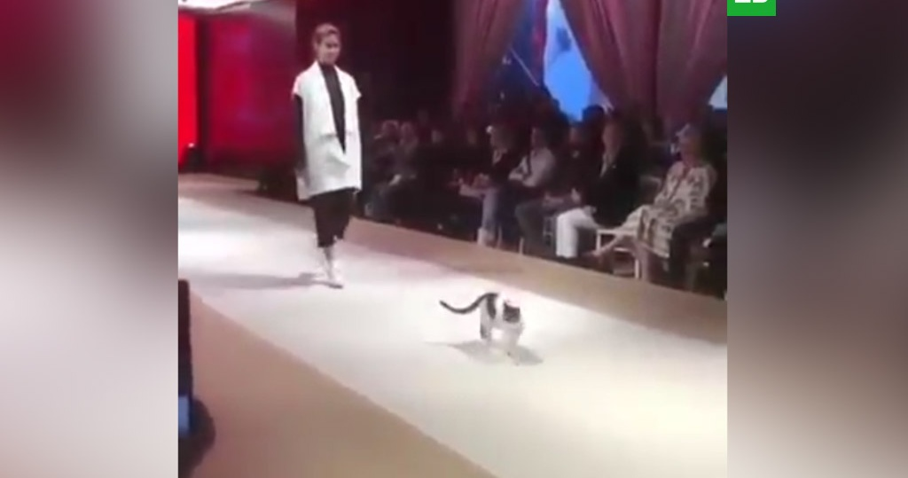 Кот стал звездой подиума во время показа мод в Турции