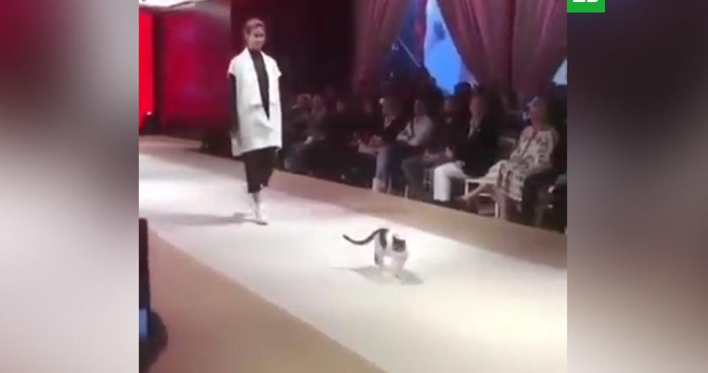 Кот стал звездой подиума во …