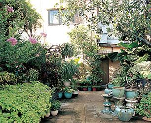 как украсить двор растениями