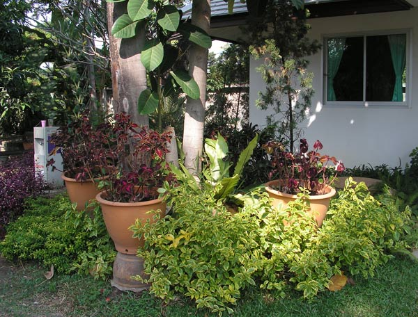 красивый сад - растения в кадках