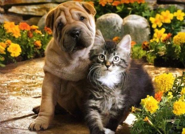 Кошка и собака в одной квартире. Любовь или война?