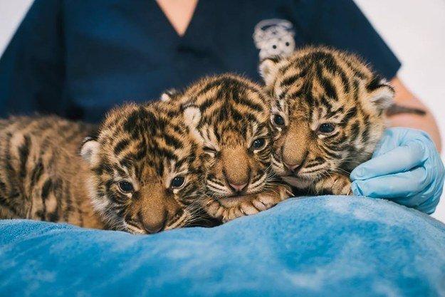 Все хорошие, пока маленькие, или Топ-20 милых фотографий животных 2014 года