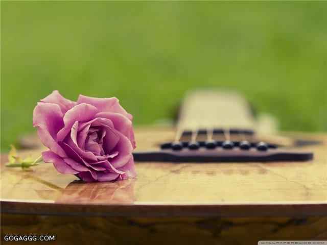 Изображение Guitar Rose. Музыка Фабрика картинок - PicsFab.com. Обои для рабочего стола