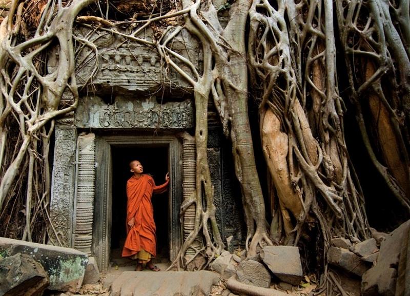 Деревья-завоеватели пространства. Фото