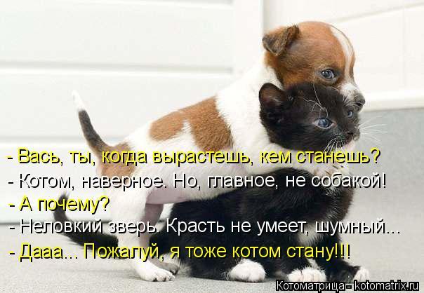 Котоматрица: - Вась, ты, когда вырастешь, кем станешь? - Котом, наверное. Но, главное, не собакой! - А почему? - Неловкий зверь. Красть не умеет, шумный... - Дааа..