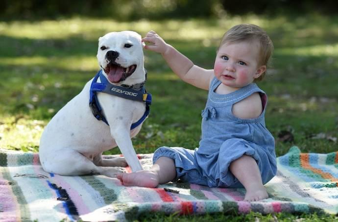 Девочка без руки и пес без лапы стали лучшими друзьями