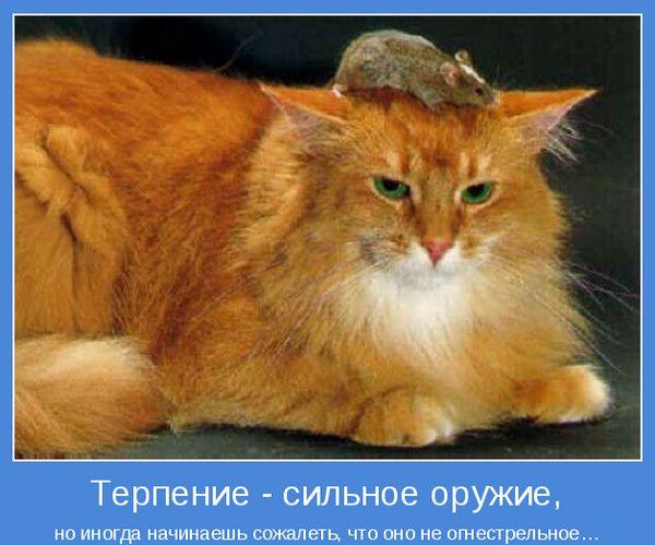Терпеливый кот