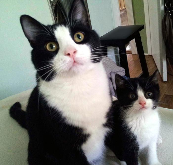34. Мать и дочь котенок, кошка