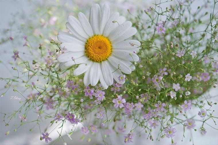 Нежнее нежного - цветы глазами Татьяны Образ