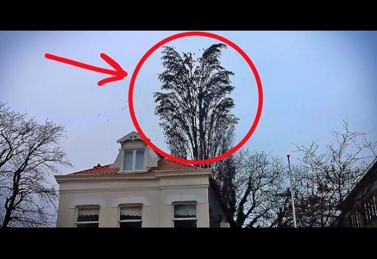 Он просто снимал на видео это дерево... Как внезапно стая птиц начала делать вот это !