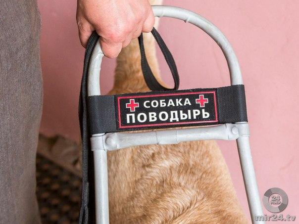 И служба, и дружба: как готовят собак-поводырей