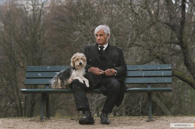 Старик пришел выкупить своих собак из приюта. Ответ волонтера растрогал его до слёз!