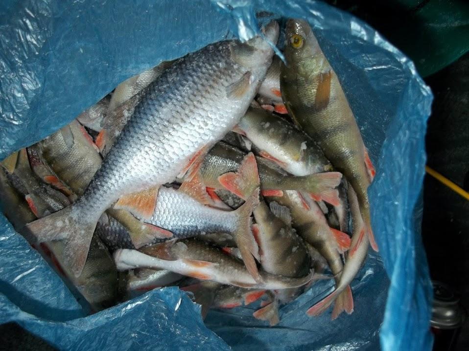 рыбалка в бурятии на селенге