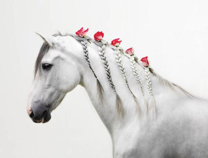 Романтическая барышня животные, коса