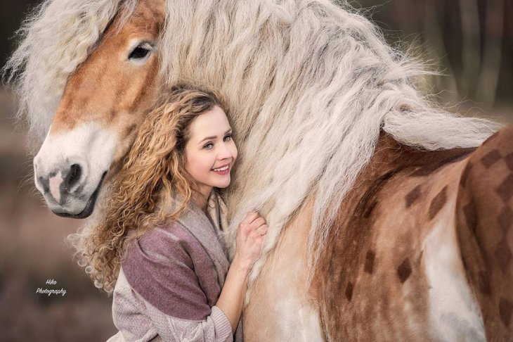Шторм — сказочная лошадь Хафлингера