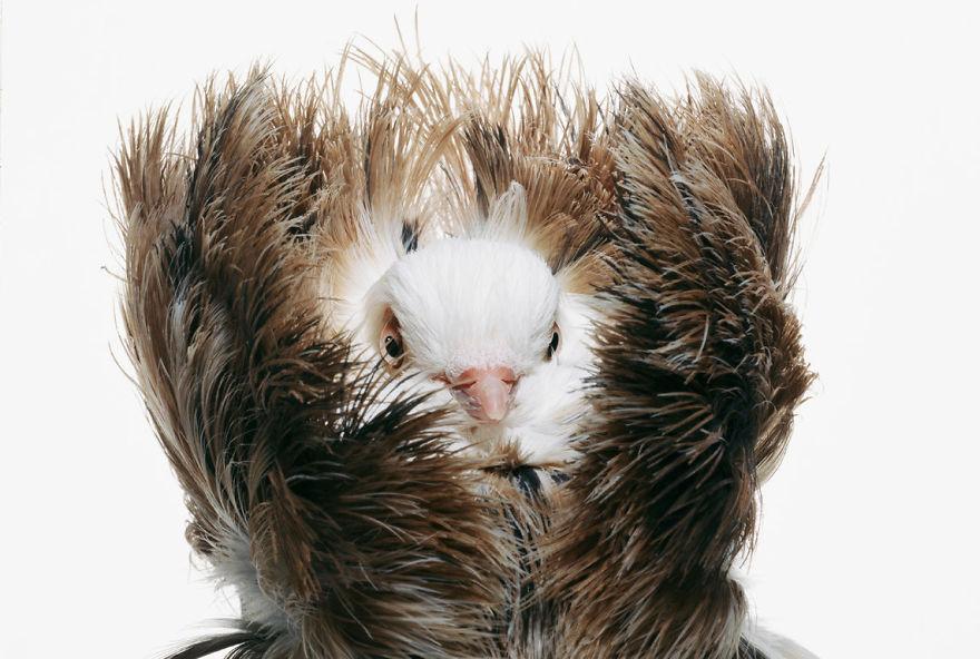 Потрясающие фотографии голубей от Ричарда Бейли