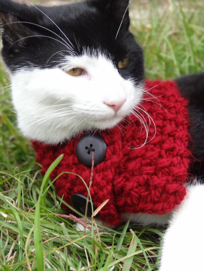 Красный - любимый цвет кардиган, кот