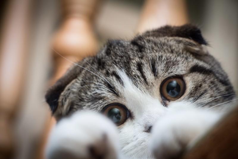Забавные фотографии кошек
