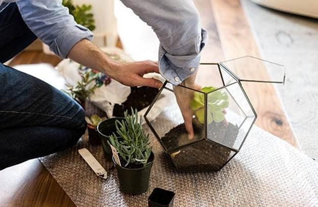 Уход за кактусами и суккулентами. Полезные хитрости