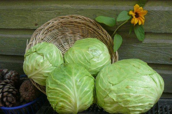 Самый простой способ как сохранить капусту свежей до следующего лета