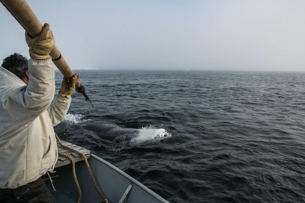 Запрещено ловить китов