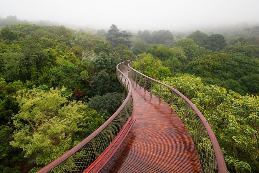 Эта подвесная тропинка в Кейптауне позволяет прогуляться над деревьями