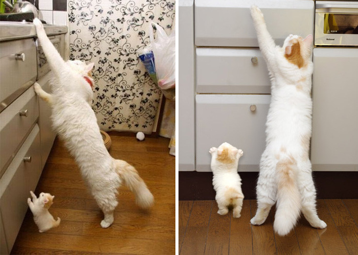 4. котенок, кошка