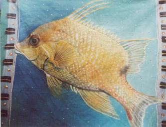 hogfish (333x255, 36Kb)
