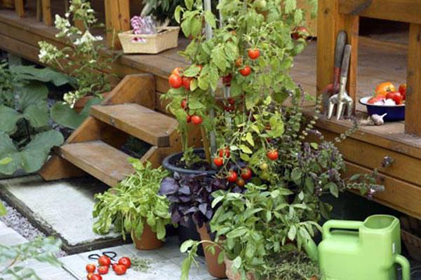 Полезные советы длясадоводов-огородников
