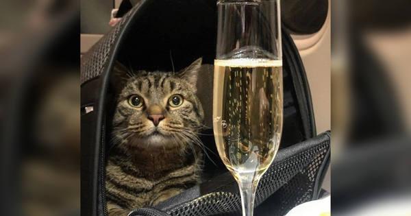 Толстый кот Виктор стал лауреатом российской веб-премии