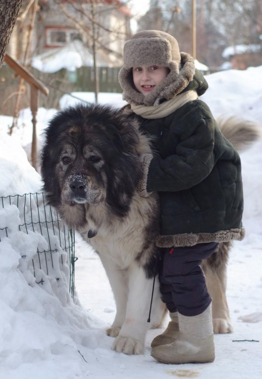 Человек собаке друг (25 фото)