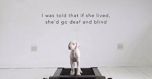Он не знает, как долго проживет его щенок, поэтому просто фиксирует каждый день, проведенный вместе!