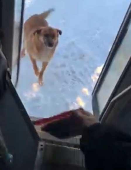 Водитель автобуса ежедневно делает остановку, чтобы накормить бездомную собаку