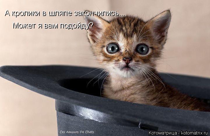 Котоматрица: А кролики в шляпе закончились... Может я вам подойду?