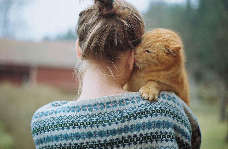 Правильный способ поднять и удержать кошку