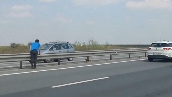 Ветеринар спас собаку, сидевшую на шоссе с оживлённым движением
