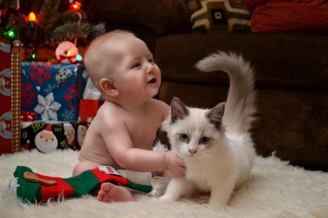 Самый запоминающийся подарок в жизни животные, коты, юмор