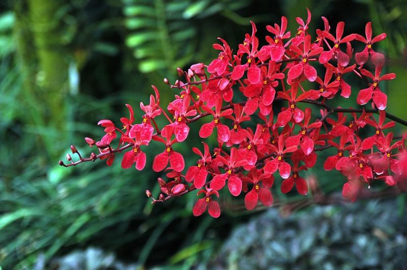 Множество орхидей