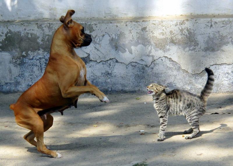 Первобытные кошки истребили древних собак