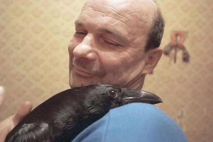 Дружба человека и вороны