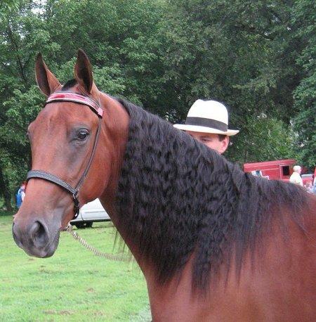 Фото лошади кроваво-гнедой масти