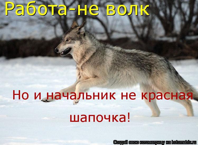 Котоматрица: Работа-не волк Но и начальник не красная шапочка!  шапочка!
